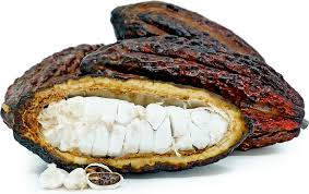 Cacao Pods Information, Recipes and Facts